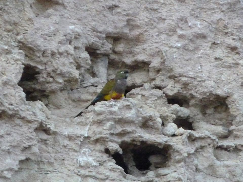 las-grutas-vida-silvestre