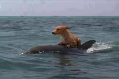 Дельфин спасает собаку !!!
